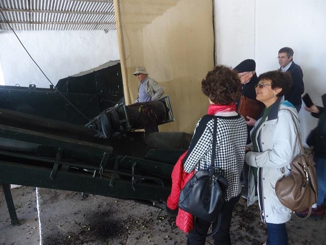 Visita guiada al molino de aceite El Callejón.